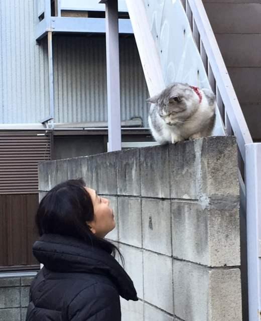 猫とアパート