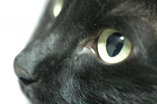 クロネコの瞳
