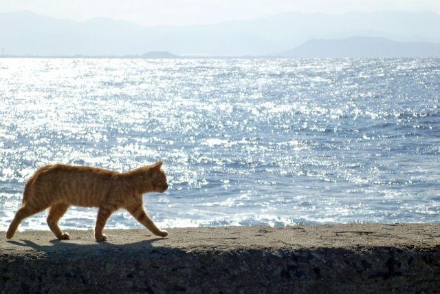 砂浜を歩く猫