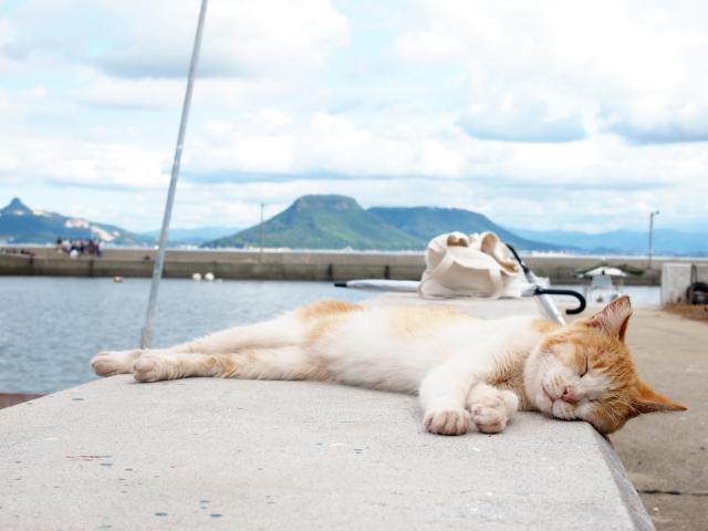 暑い夏と猫