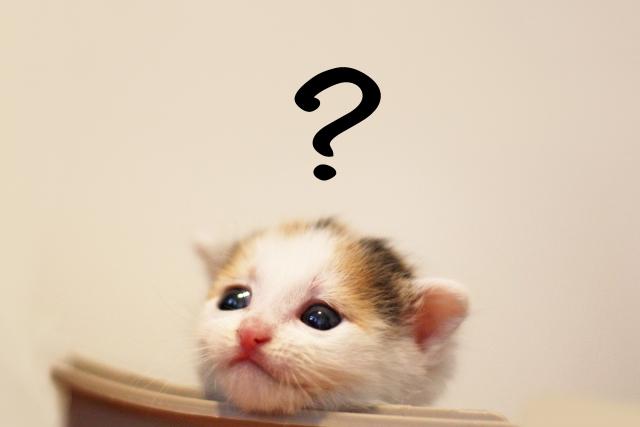 住宅インスペクションで悩む猫