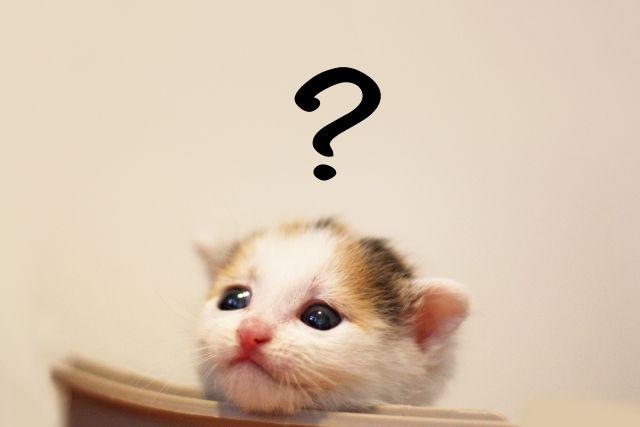 考える子猫