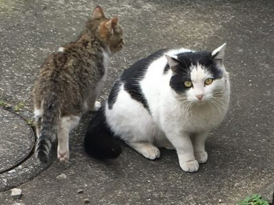 競売のアパートの現地調査で猫と出会う