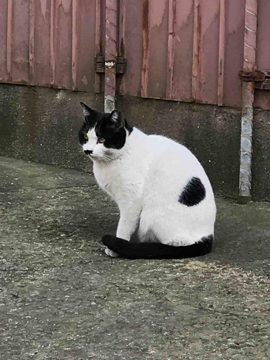 横須賀のアパートの現地調査で猫と出会う