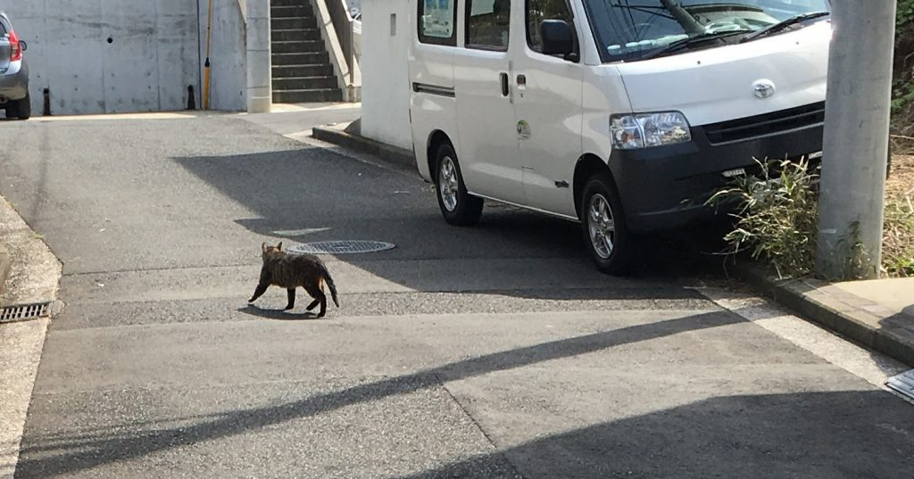 上大岡の猫