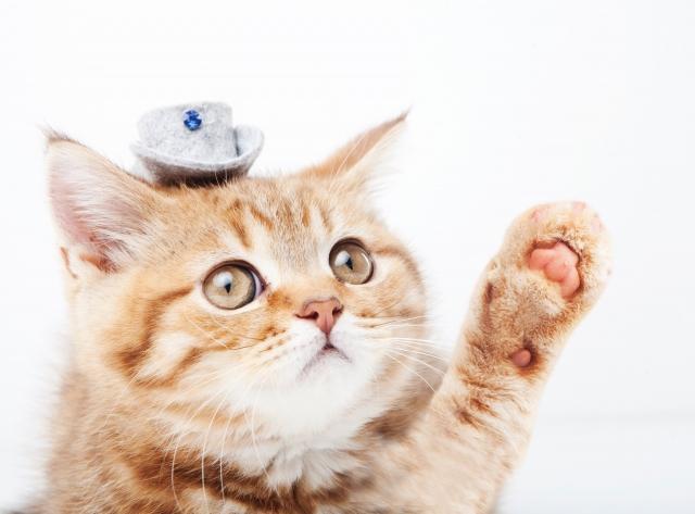 手を挙げる猫